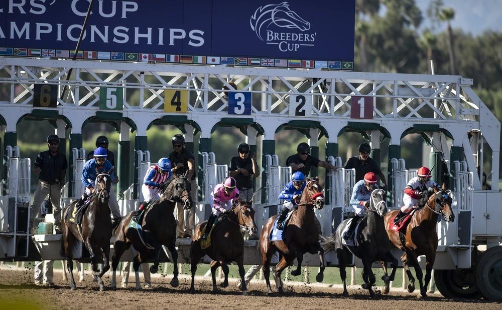breeders cup horses in stalls