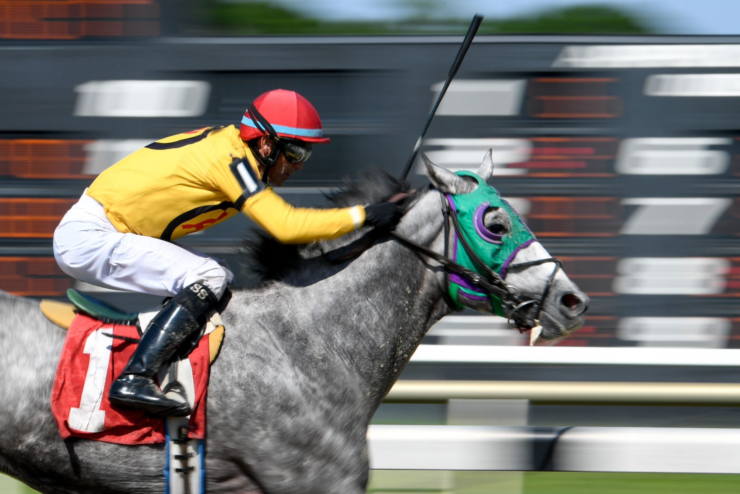 Scott Spieth atop Silverly Enough wins the eighth race of the day at Tampa Bay Downs.